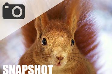Moja foto historia: Snapshot