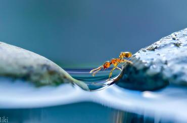 Niezwykła makrofotografia Miki Asai