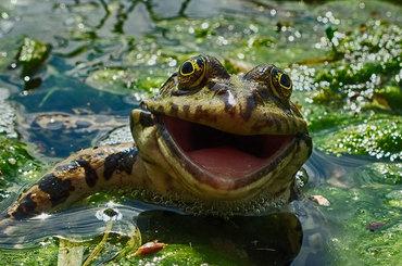 Comedy Wildlife Photography Awards - komedia wśród zwierząt