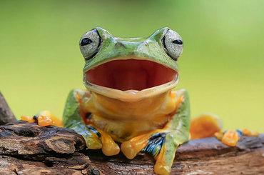 W świecie żab z Tanto Yensenem - niezwykły przegląd!