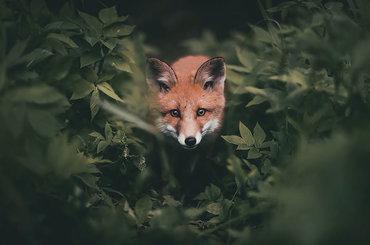 W maksymalnym zbliżeniu na leśne życie - Konsta Punkka