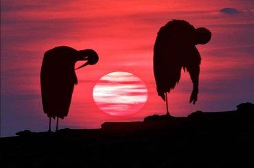 """WYNIKI FOTOPOJEDYNKU """"Zachód słońca"""""""