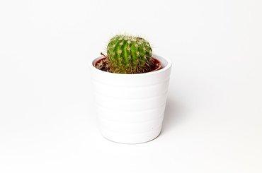 Biały przedmiot, białe tło - ćwiczenie fotograficzne