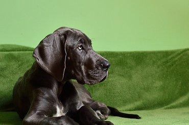 Portrety zwierząt - ćwiczenia fotograficzne
