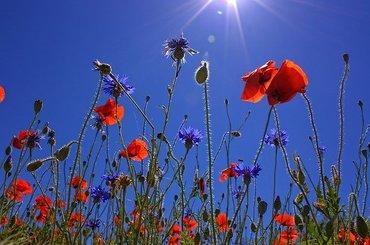 Wiosenne kwiaty - ćwiczenia fotograficzne