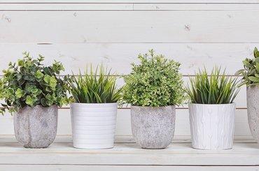Jak pielęgnować rośliny doniczkowe?