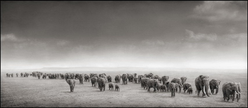 elephant-exodus