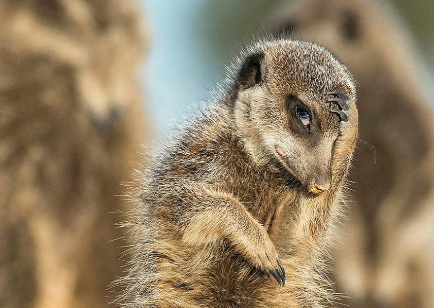comedy-wildlife-photography-awards-shortlist-2016-28-57fb40ce6db78__880